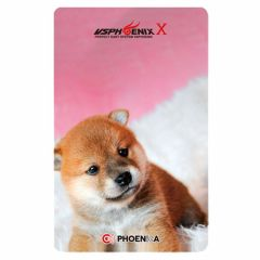 """Card"" Phoenix Card 2018028"